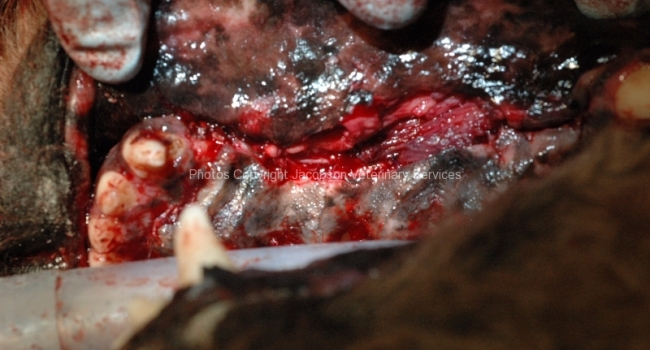 14-surgical-site-closed-in-three-layers