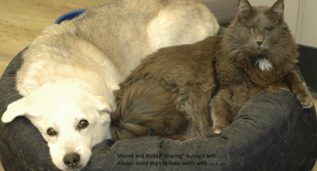 5-buddy-and-mook-in-buddys-bed-013013-crop