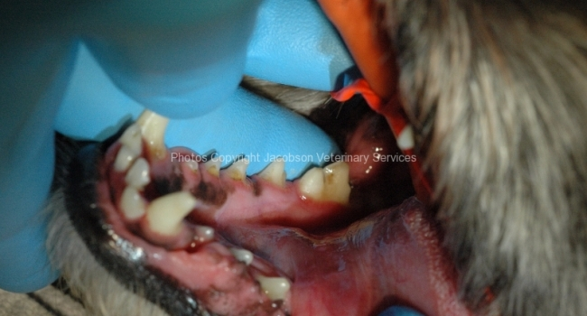 2-patient-suffering-due-to-anesthesia-free-dentistry